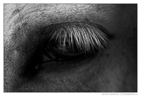 Фото Закрывающийся глаз коня