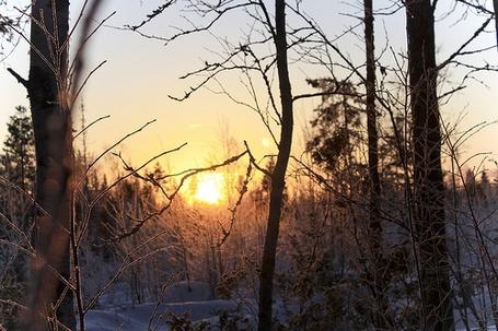 Фото Зимнее солнце (© Штушка), добавлено: 03.12.2011 03:33
