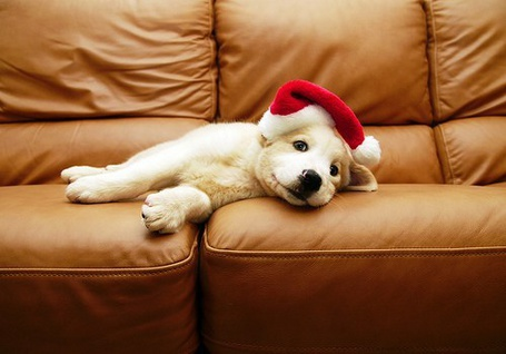 Фото Собака лежит на диване в новогодней шапке