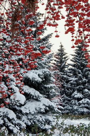 Фото Зима в лесу (© Lano4ka), добавлено: 03.12.2011 20:32