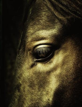 Фото Глаз коня