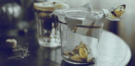 Фото Бабочки в банке (© ColniwKo), добавлено: 04.12.2011 15:34
