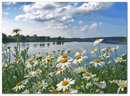 Фото Тихое озеро под голубым небом в окружении полей, лесов и цветущих ромашек (© Anatol), добавлено: 05.12.2011 19:05
