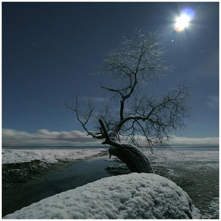 Фото Одинокое дерево возле зимней реки (© Флориссия), добавлено: 06.12.2011 16:28