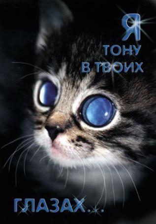 Фото Котик со странными глазами (Я тону в твоих глазах...)