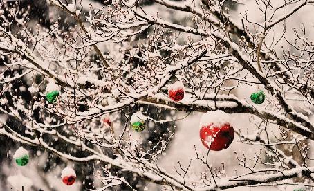 Фото Шарики висят на дереве (© Штушка), добавлено: 08.12.2011 02:46