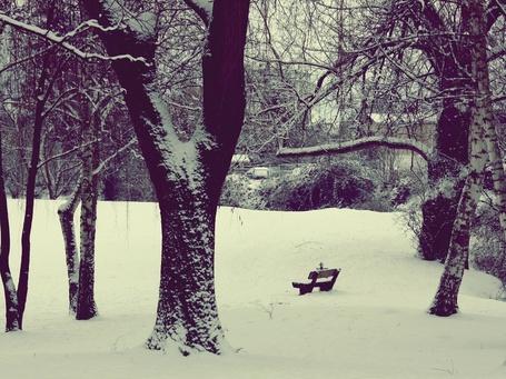 Фото Деревья запорошены снегом