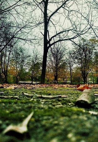 Фото Осеннний парк по середине которого стоит дерево (© lemon), добавлено: 10.12.2011 16:33