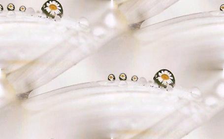 Фото На ромашке роса с отражение (© Antuannet), добавлено: 12.12.2011 05:58