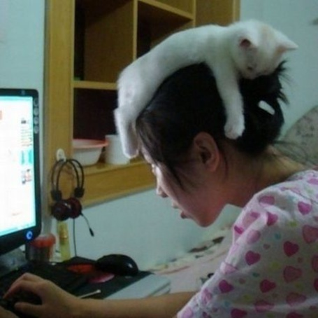 Фото Котенок лежит на голове у девушки, которая сидит за компьютером