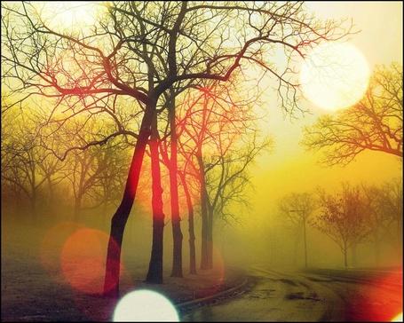 Фото Осень, туман, солнечные блики... (© Флориссия), добавлено: 12.12.2011 14:18