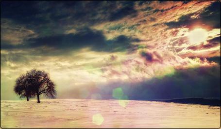 Фото Дерево в поле зимой (© Флориссия), добавлено: 12.12.2011 14:21