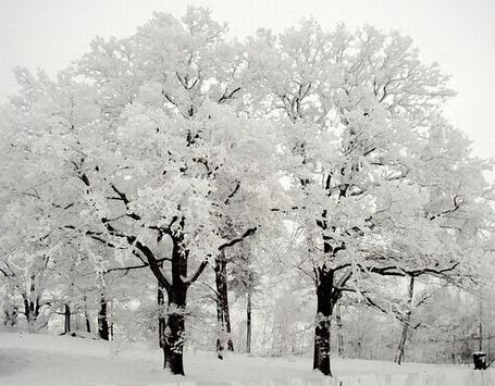 Фото Красивый лес в снегу (© Штушка), добавлено: 13.12.2011 23:21