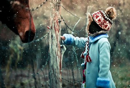 Девушка хочет погладить у коня фото