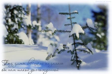 Фото Заснеженный зимний лес (Без зимы весна не казалась бы нам такой долгожданной) (© Anatol), добавлено: 18.12.2011 02:35