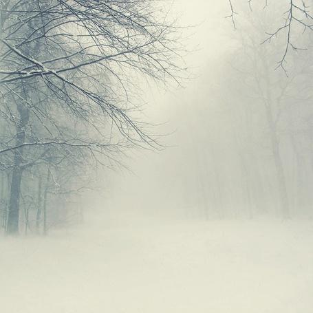 Фото Зимний, туманный лес с сугробами снега (© lemon), добавлено: 18.12.2011 18:46