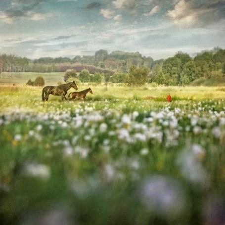 Фото Весеннее поле в цветах, вдалеке гуляет лошадь со своим жеребенком (© Radieschen), добавлено: 19.12.2011 11:41
