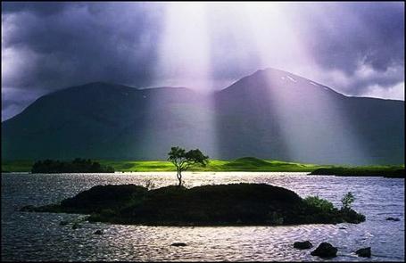 Фото Дерево на маленьком островке среди воды (© Флориссия), добавлено: 22.12.2011 15:45