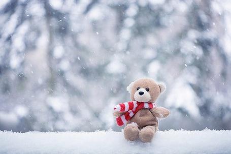 Фото Маленьктй плюшевый мишка в шарфике сидит на снежной полянке (© Кофе мой друг), добавлено: 23.12.2011 20:11