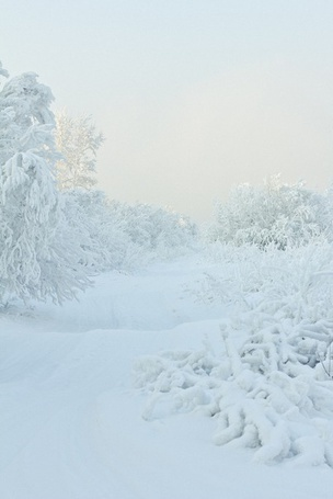 Фото Снежный лес (© Кофе мой друг), добавлено: 23.12.2011 20:17