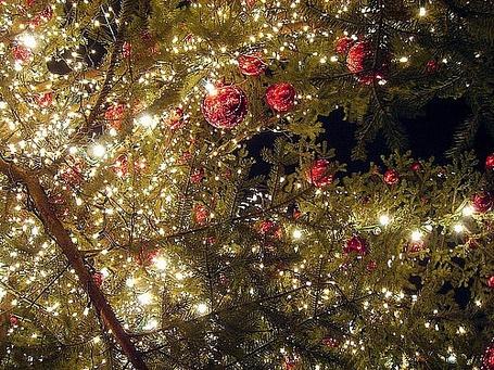Фото Новогодние украшения на деревьях (© Кофе мой друг), добавлено: 24.12.2011 15:36