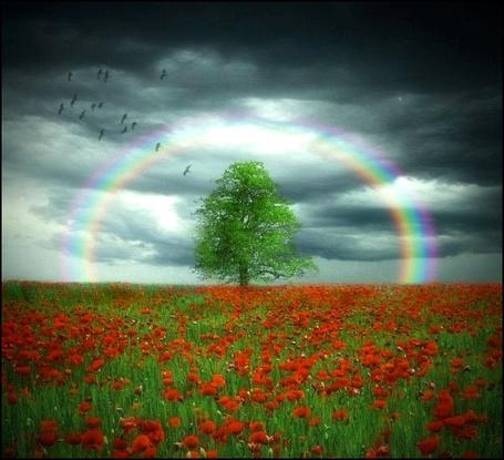 Фото Дерево на цветочной поляне под радугой