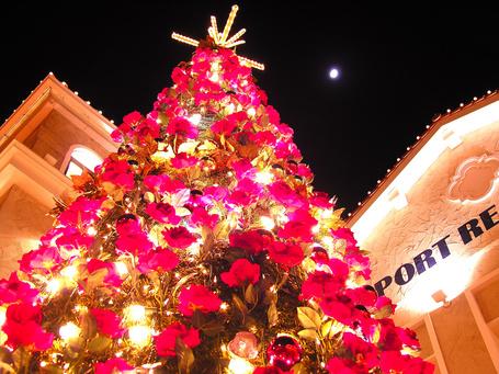 Фото Елка украшена цветами (© StepUp), добавлено: 25.12.2011 17:11