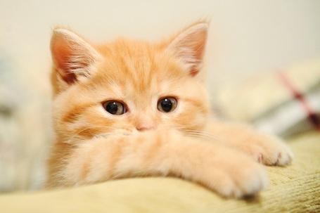 Фото Маленький рыжий котенок (© Кофе мой друг), добавлено: 26.12.2011 14:16
