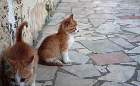 Фото Два рыжих котенка