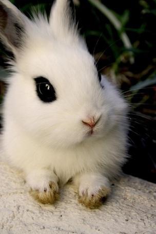 Фото Маленький кролик с выразительными глазками (© Кофе мой друг), добавлено: 28.12.2011 11:48