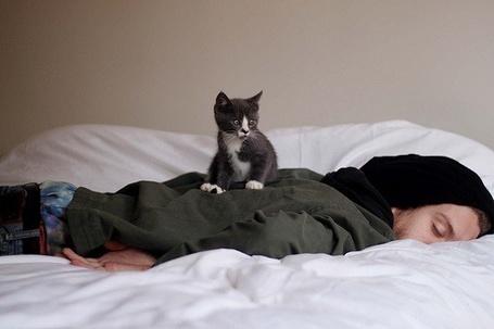 Фото Парень лежит на кровати, на нем сидит котенок (© Mary), добавлено: 28.12.2011 13:08