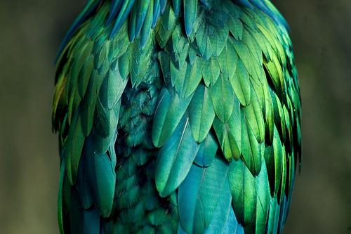 Фото Оперение зелено-бронзовой птицы