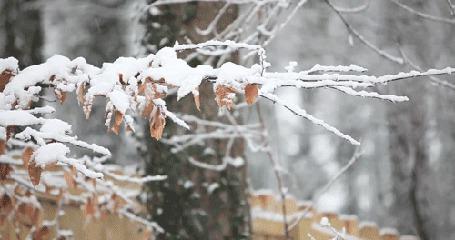 Фото Снегопад в осеннем лесу (© Радистка Кэт), добавлено: 02.01.2012 00:56