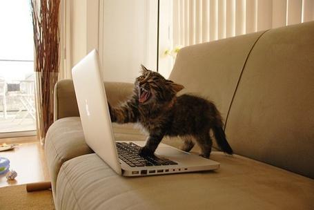 Фото Кот недоволен работой ноутбука (© Кофе мой друг), добавлено: 03.01.2012 13:12