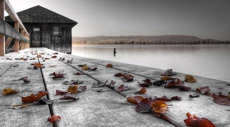 Фото Осенние листья на пристани (© Флориссия), добавлено: 04.01.2012 14:31