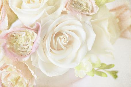 Фото Нежные розы (© Штушка), добавлено: 05.01.2012 11:40