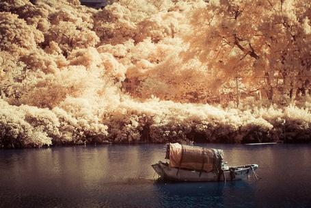 Фото Одинокая лодка в осеннем лесу (© Кофе мой друг), добавлено: 07.01.2012 13:50