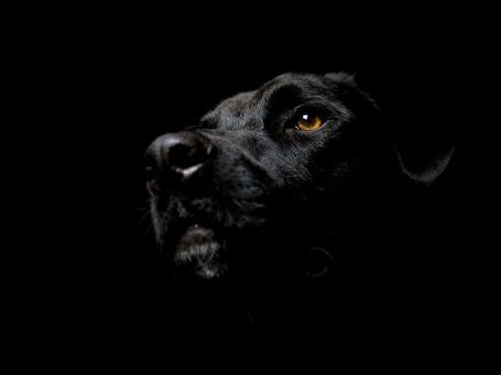 ���� ������ ������ � ������ ������� (Noir-esque Dog) (� Anatol), ���������: 09.01.2012 16:59