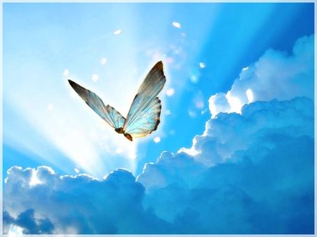 Фото Волшебная бабочка летит по небу