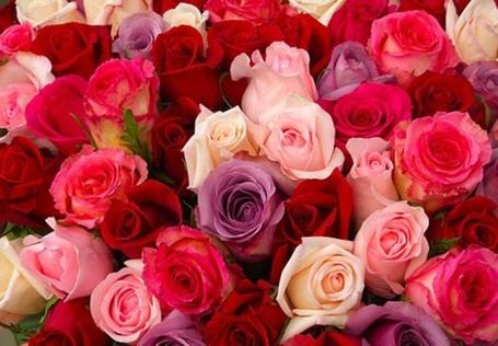Фото Разноцветные розы (© Кофе мой друг), добавлено: 14.01.2012 17:51