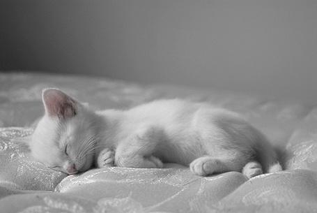 Фото Котик спит (© Mary), добавлено: 16.01.2012 02:13