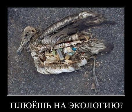 Фото Плюёшь на экологию? (© Флориссия), добавлено: 18.01.2012 12:22