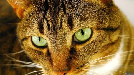 Фото Очень серьёзный кот (© Anatol), добавлено: 20.01.2012 03:40