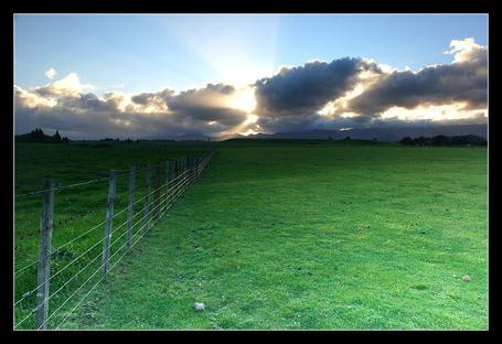 Фото 'Поле для пастбища' Работы фотографа Anthony который из Окленда, Новая Зеландия (© Штушка), добавлено: 21.01.2012 20:05