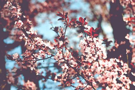 Фото Цветущее дерево (© Радистка Кэт), добавлено: 22.01.2012 02:13