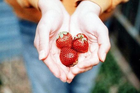 Фото Три ягоды клубники в ладонях (© Радистка Кэт), добавлено: 22.01.2012 02:44
