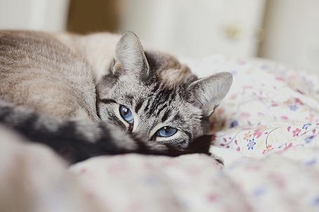 Фото Кот улегся спать на кровать (© Радистка Кэт), добавлено: 22.01.2012 02:59