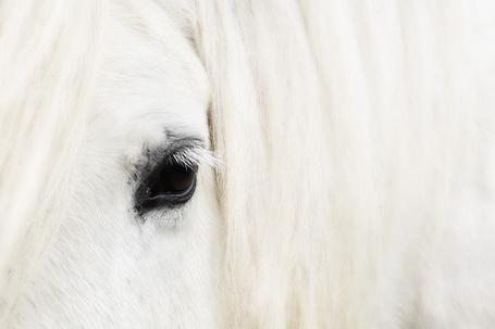 Фото Белая лошадь