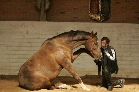 Фото Конь дал лапу мужчине ' Фотограф Лидия Невзорова ' (© Штушка), добавлено: 25.01.2012 16:19