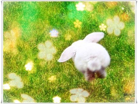 Фото Кролик скачет по траве (© Флориссия), добавлено: 26.01.2012 14:15